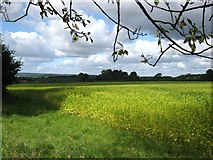 SU7989 : Crops in the Chilterns by don cload