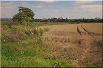 SJ8931 : Wheat, Pire Hill by Derek Harper