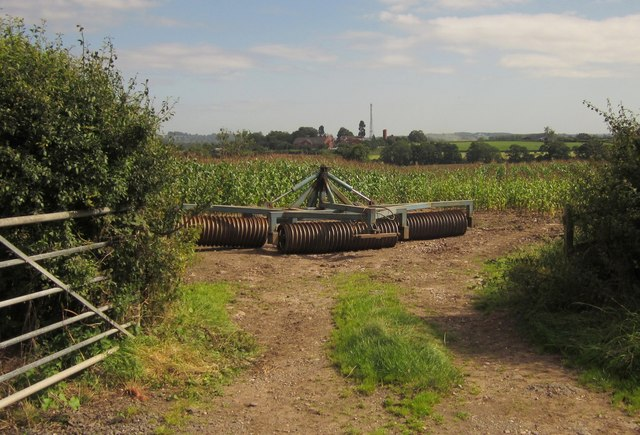Roller and maize field, Pire Hill