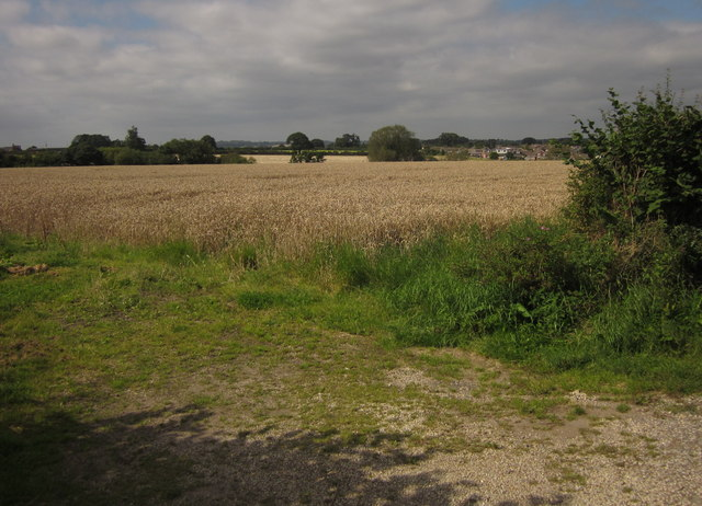 Wheat by Pirehill Lane