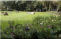 SW4529 : Smallholding with chicken and ducks by Elizabeth Scott