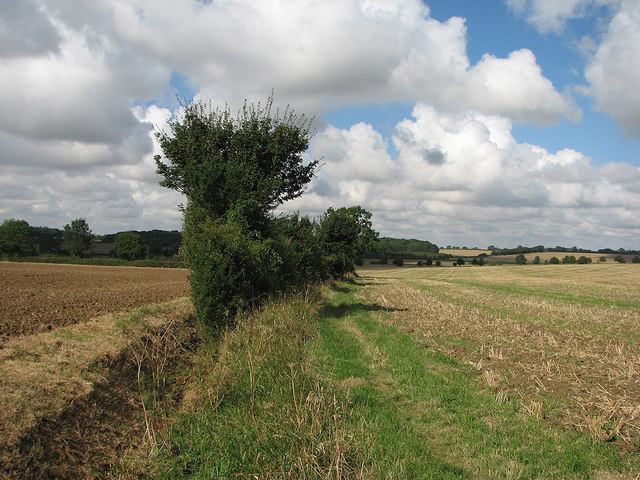 Fields, footpath and woods