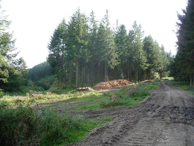 Logging operation on Sunnyhill