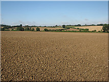 TL6353 : Over fields to Willingham Green by John Sutton