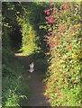 SY2491 : Cat on path, Roman Way, Seaton by Derek Harper
