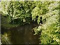SJ9885 : River Goyt by David Dixon