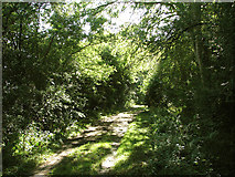 TL6353 : Shady byway by John Sutton