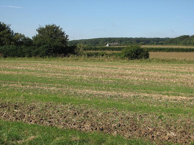 Towards Mill Hill