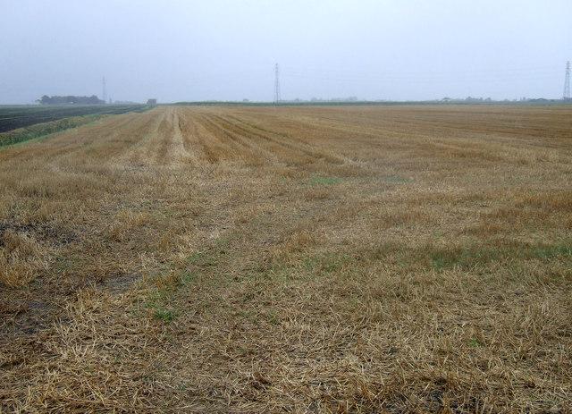 Farmland off Wisbech Road