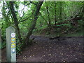 ST5356 : Three off the leash on the Limestone Link (78) by Basher Eyre
