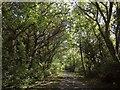 SY2894 : Mounthill Lane by Derek Harper