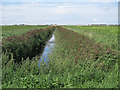 TL5387 : Reedy ditch by Third Drove by Hugh Venables