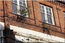 SU7682 : Buddleia under the windows by Bill Nicholls