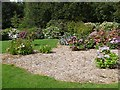 S7218 : Hydrangea Collection, JF Kennedy Memorial Arboretum by Oliver Dixon