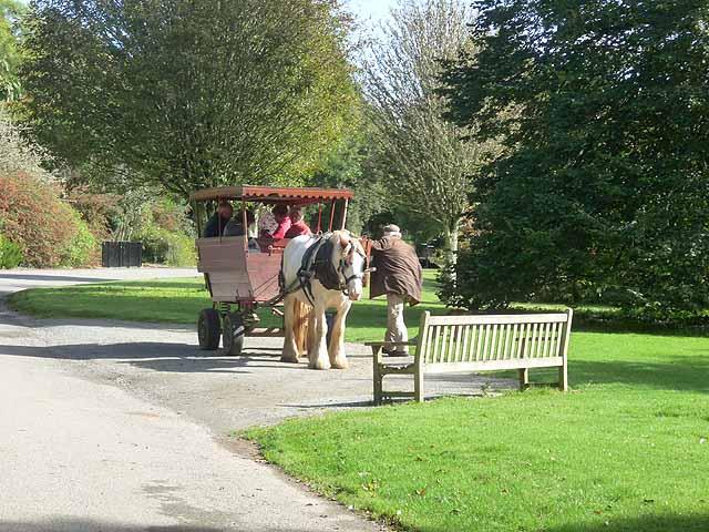 Horse-drawn wagon, JF Kennedy Memorial Arboretum