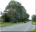 SN8012 : Tree-lined Brecon Road near Cae'r-Lan by Jaggery