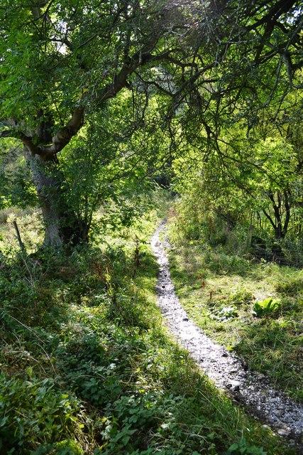 Path to Birchill Bank Wood, Hassop