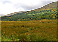 NN2635 : Rough ground north of Glen Orchy Farm by John Allan