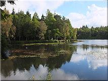 NT4227 : Woodland and water, Bowhill by Jim Barton