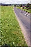 SE1187 : Middleham Moor Road approaching Middleham by Roger Templeman