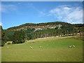 NN9359 : Grazing sheep below Creag Glunaidh by Karl and Ali