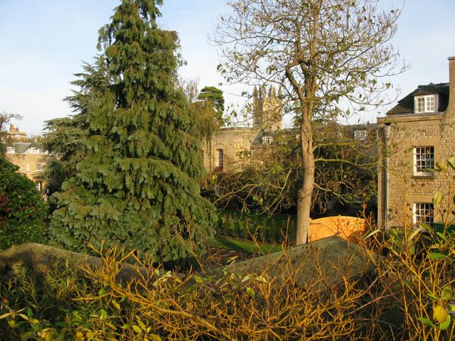 View towards Rose Lane from path around Fellows' Garden