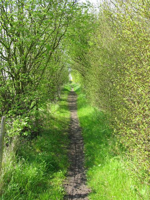 Bridleway alongside the A256