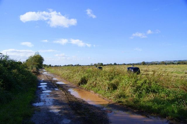 Drove over Sedgemoor
