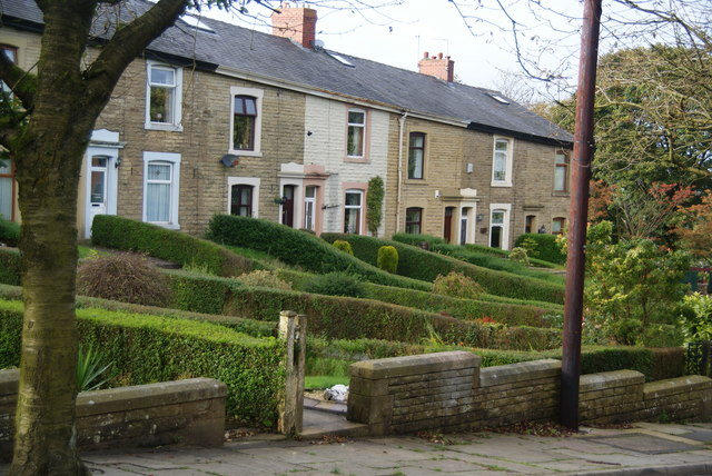 Houses and hedges on Carus Street, Hoddlesden