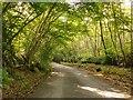 TQ0520 : Woodbank by Pickhurst Lane by Stefan Czapski