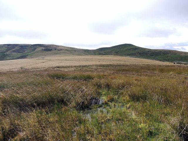 Bog on Border ridge north of Whitelaw Nick