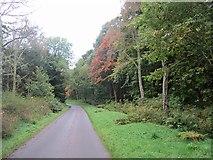 NT2538 : Road to Haystoun by Richard Webb