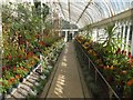 J3372 : Inside the west wing of the Palm House in the Botanic Gardens by David Smith