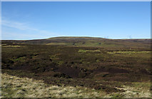 NY8220 : Peat haggs and banks near Stoneshaw Rigg by Trevor Littlewood