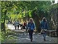 SX4874 : Riverside Walk, Tavistock by Robin Drayton