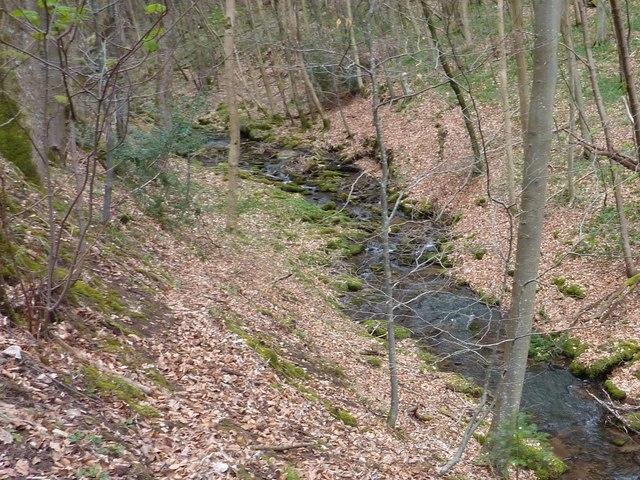 Woodland Stream above Pont Cadwgan
