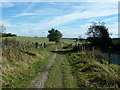 SU8417 : Bridleway crossing the South Downs Way by Dave Spicer