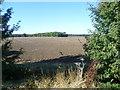 TL2579 : Field and belt of trees near Little Raveley by Marathon