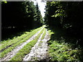 SU8416 : Conifers bordering bridleway in Linchball Wood by Dave Spicer