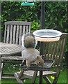 SX9065 : Squirrel at the feeding station by Derek Harper