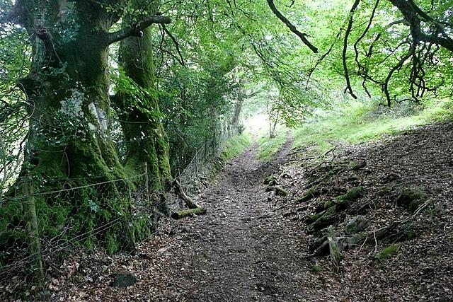 Bridleway alongside Yarner Wood