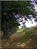 TM3775 : Salters Lane Bridleway by Adrian Cable
