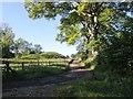 NZ1384 : Track to Garden House by Alex McGregor