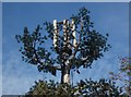 SX8964 : Mobile Phone mast, Nut Bush Lane by Derek Harper
