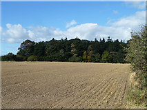 SE4298 : Jubilee Plantation by Robin Webster