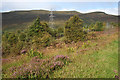NN7262 : Beside the Road on Drumcroy Hill by Anne Burgess