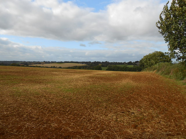 Newly Sown Field at Horley
