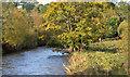J1785 : The Sixmilewater, Muckamore (2) by Albert Bridge