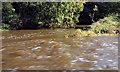 J1685 : The Sixmilewater, Muckamore (4) by Albert Bridge