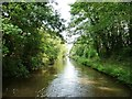 SO9162 : Tree-lined cutting, Worcester and Birmingham Canal by Christine Johnstone